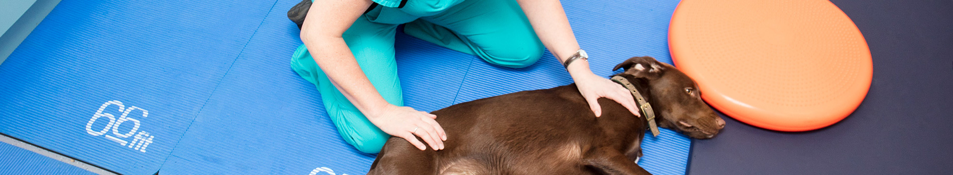 Physiotherapy Veterinary Services