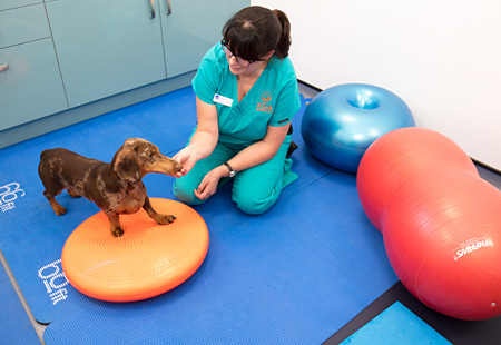 A Physiotherapy session with a dog