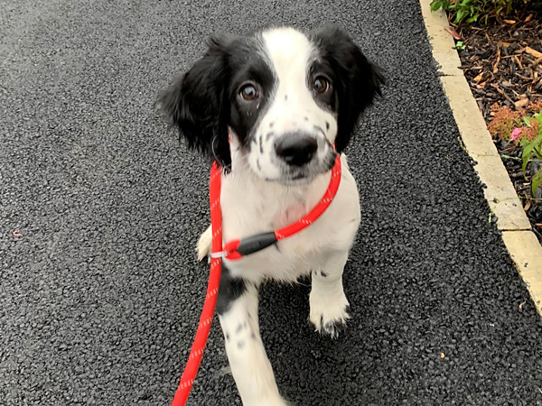 Arrowing experience for jax the spaniel