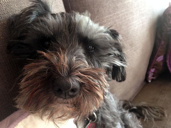Vets perform lifesaving 'miracle' on poisoned dog