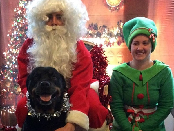 Christmas operation meant Happy New Year for Rottweiler Roxy