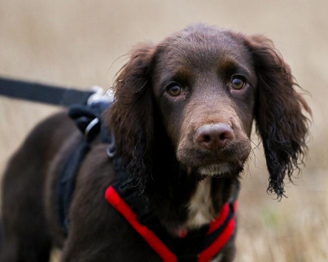 Rare Life Saving Surgery on Young Pup