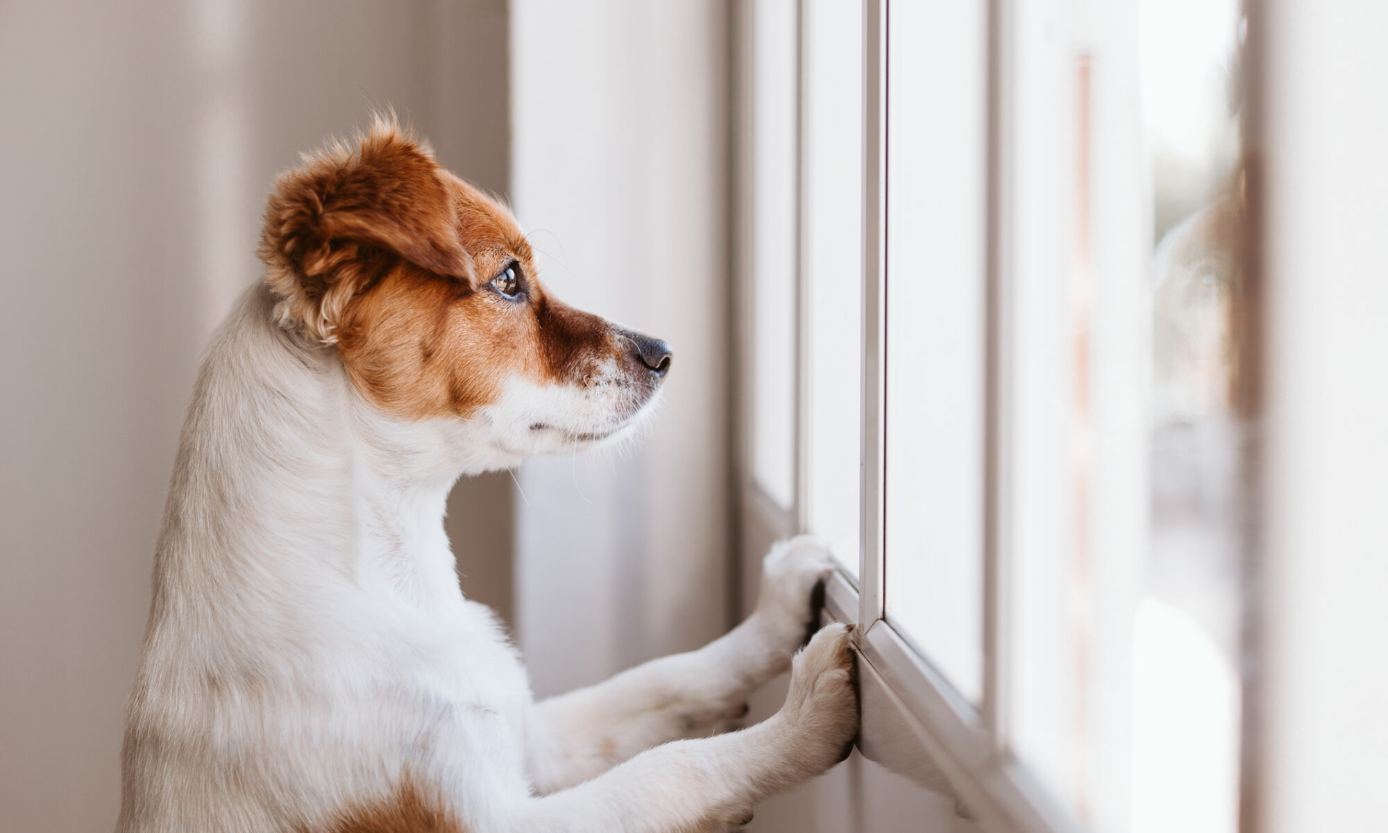 Guide to Chronic Diarrhoea in Pets