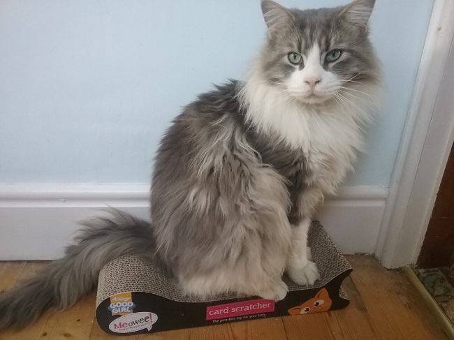 Wear Referrals Help Cat Reuben, Who Had a Severe Infection Inside His Chest